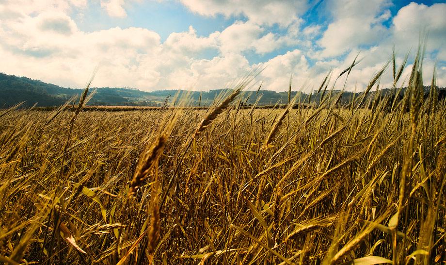 Campos de Galicia
